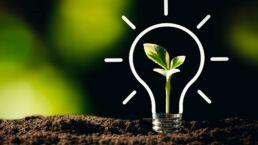 Energiepflanzen: Die 7 wichtigsten in der Übersicht